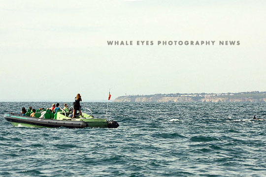 News from Whale Eyes Photography